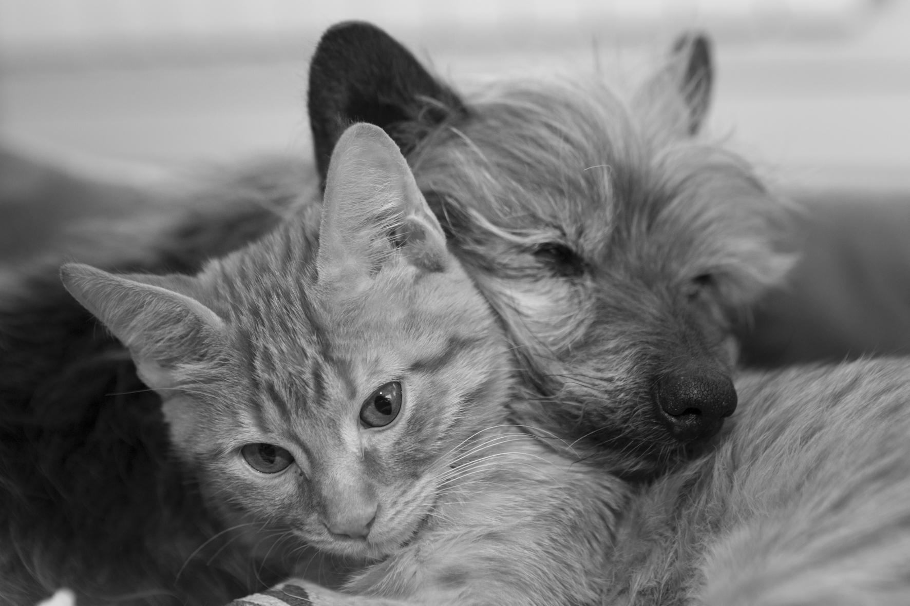 Gato y perro descansando